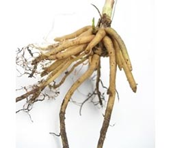 Too Much Valerian Root Side Effects