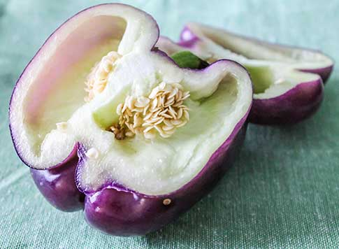 Purple Bell Pepper Recipe, Taste & Health Benefits.