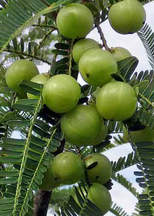 amla-for-hair-oil-powder-products