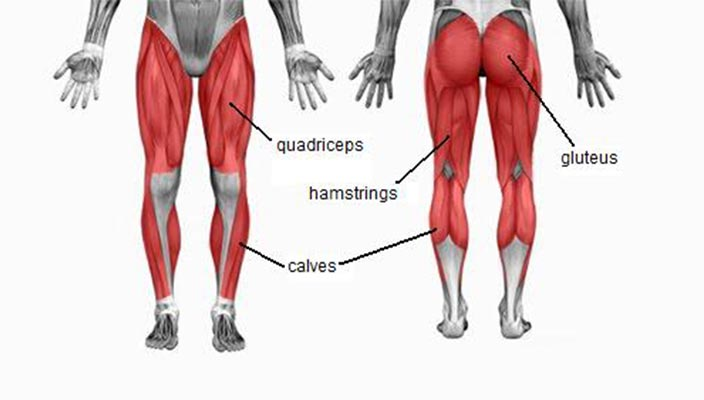 Glute workouts-How is your rear structured-rear muscles