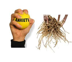 Tips on How to Use Valerian Root for Anxiety