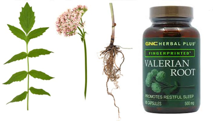 Valerian root dosage for dogs