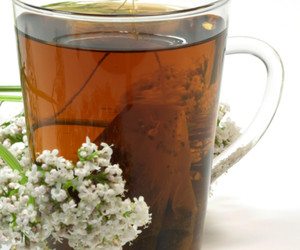 Valerian Root Tea Benefits