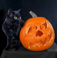 Halloween Pet Safety Tips, Common Dangers