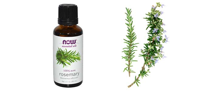 Rosemary-Essential-Oil-Uses-Benefits-for-Hair-Skin-Properties