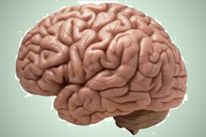 Picture-of-the-brain