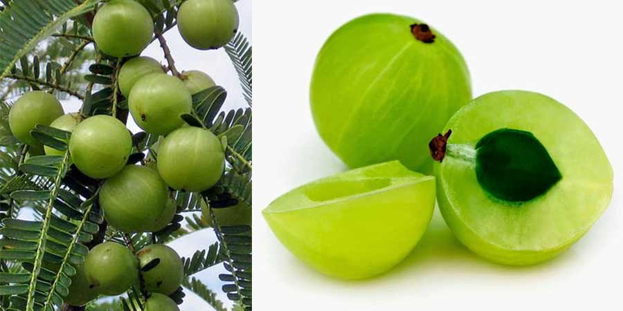 what is Amla? Benefits for Weight Loss skin Health & Side Effects