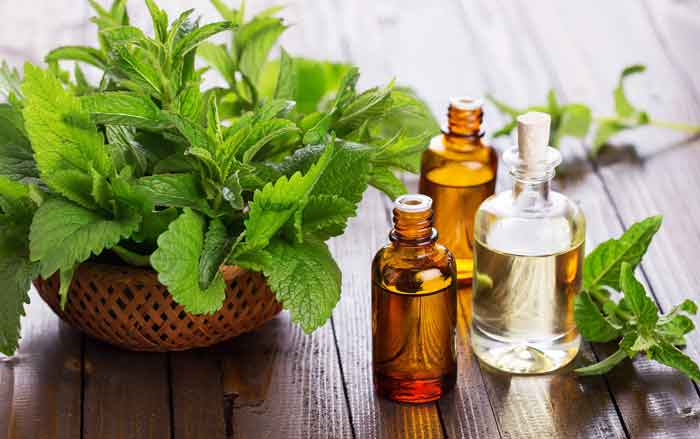 Peppermint oil for poison ivy treatment