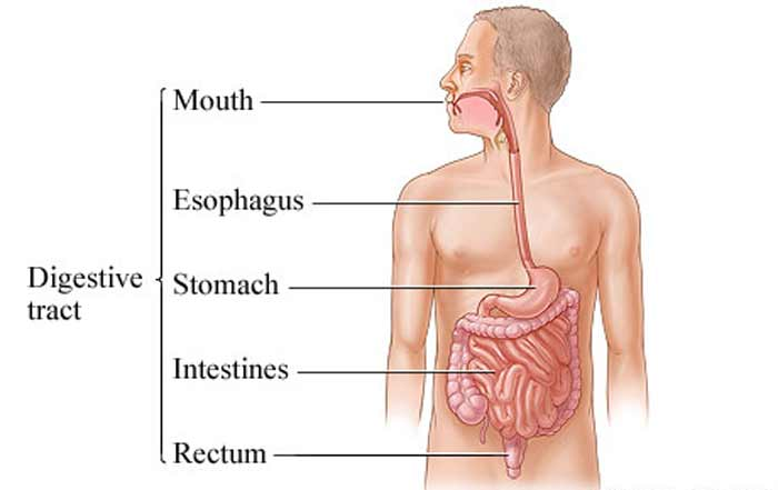 digestive tract infection causes smelly gas