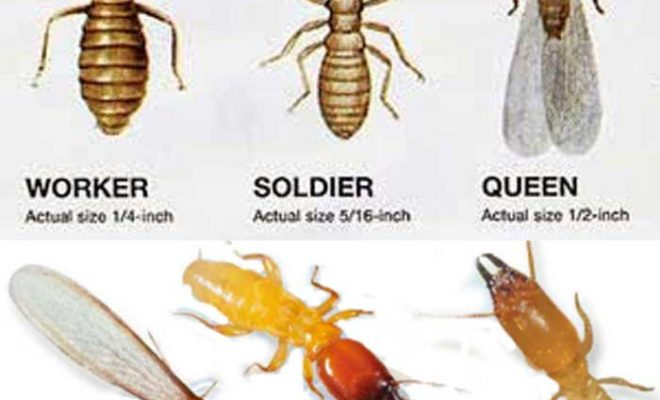 Get rid of termites-types-cost